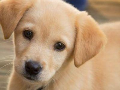Δείξτε τις διαθέσεις του σκύλου σας